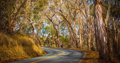 Pecho Valley Road (California)