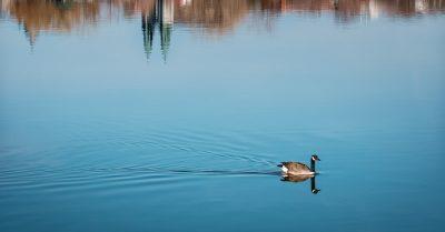 Urban Goose (Montreal)