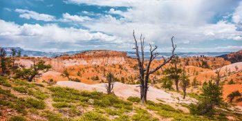 Burned Tree at the Bryce Canyon (Utah)