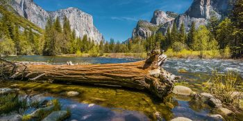Fallen Tree At Merced River (Yosemite)