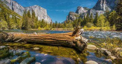 Fallen Tree At Merced River (Yosemite)