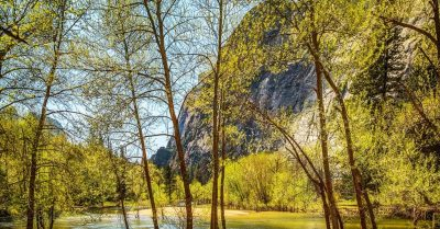 Perfect Picnic Spot in Yosemite (California)