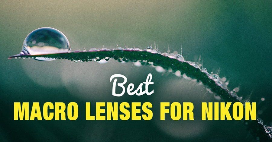 Top 6 Best Macro Lenses for Nikon in 2019