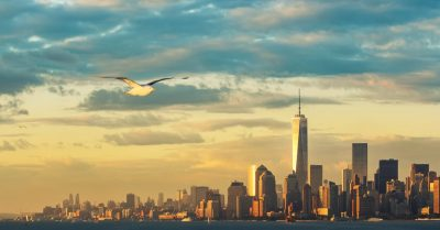 Manhattan Sunset Bird (New York)