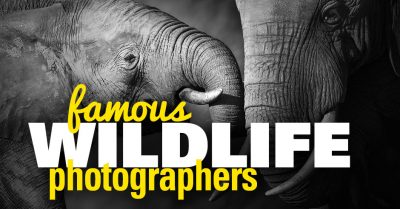Top 12 Famous Wildlife Photographers