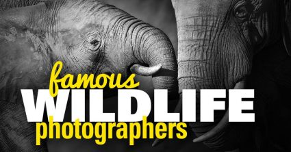 Famous Wildlife and Nature Photographers