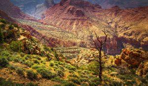 Burn Tree at the Desert View (Arizona)
