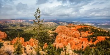 Lone Tree at the Edge of the Bryce Canyon (Utah)
