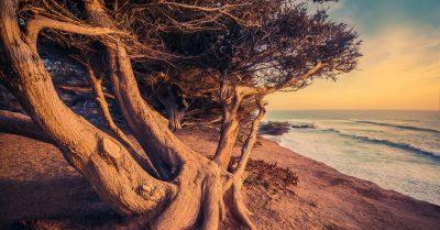 Moonstone Beach Sunset Tree (California)