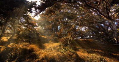 Point Lobos Magic Forest (California)