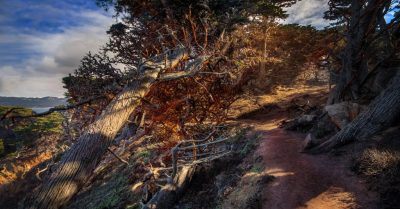 Path to the Magic Forest (Point Lobos)