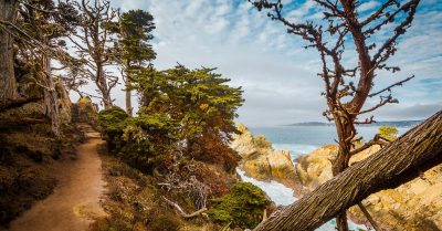 Hiking in the Magic Forest of Point Lobos (California)