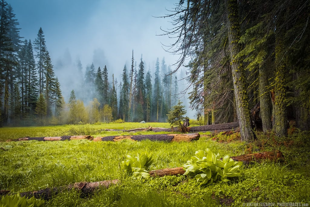 C​resent Meadow in Sequoia National Park