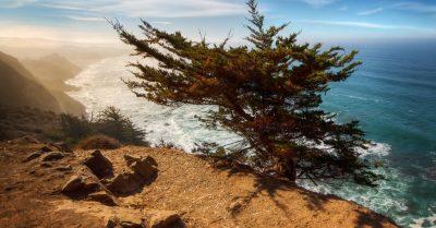 Ragged Point's Cypress Tree (California)