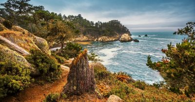 The Tree Stub at Cypress Cove in Point Lobos (California)