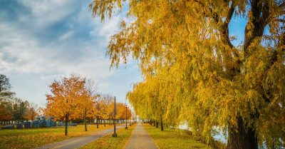 Colors of Indian Summer (Montreal)