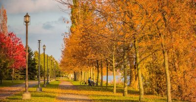 Golden Alley in the Park (Montreal)