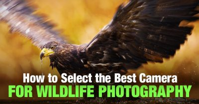 How to Select the Best Camera for Wildlife Photography