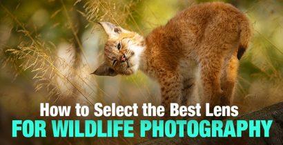 Best Lens for Wildlife Photography: 13 Great Picks