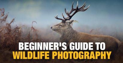 Introduction to Wildlife Photography: A Guide for Beginners