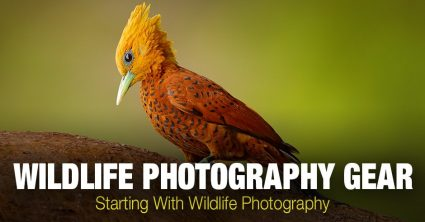 Wildlife Photography Gear: Starting With Wildlife Photography