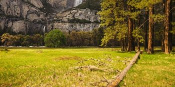 Fallen Tree at Cook's Meadow (Yosemite)