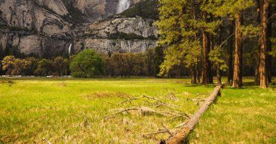 Fallen Tree at Cook's Meadow (Yosemite)