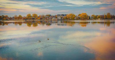 Ducks in Saint Lawrence River