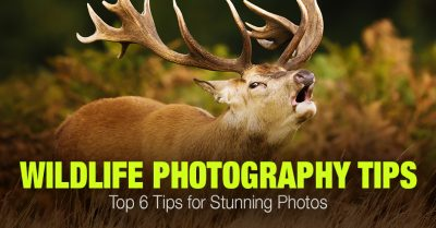 Top 6 Wildlife Photography Tips for Stunning Photos