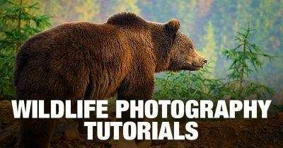Wildlife Photography Tutorials