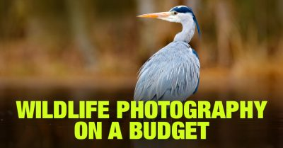 Wildlife Photography on a Budget: Your Best Options Today