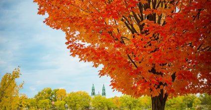 Burning Tree (Montreal)