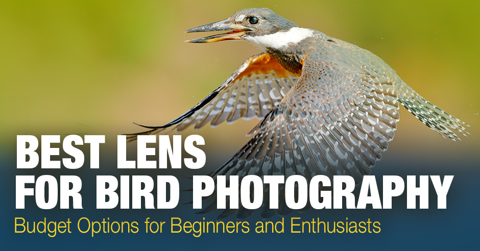 Best Lens for Bird Photography: Budget Options for Beginners and Enthusiasts