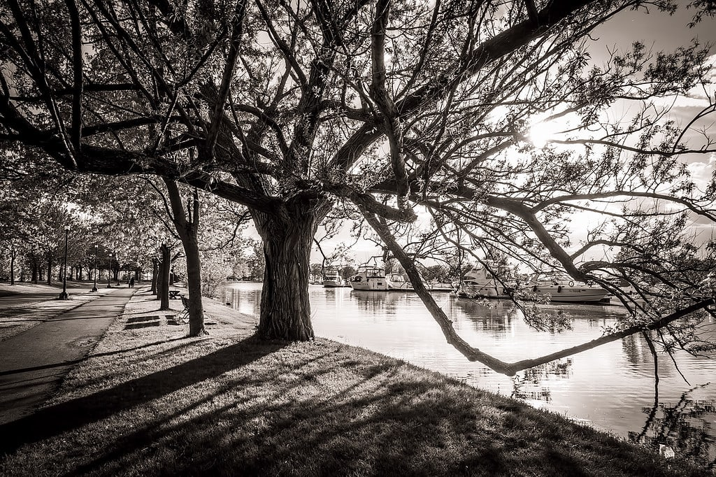 Creating Black and White Images In-camera
