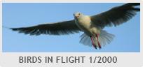 Shutter Speed Value - Birds in Flight 1/2000